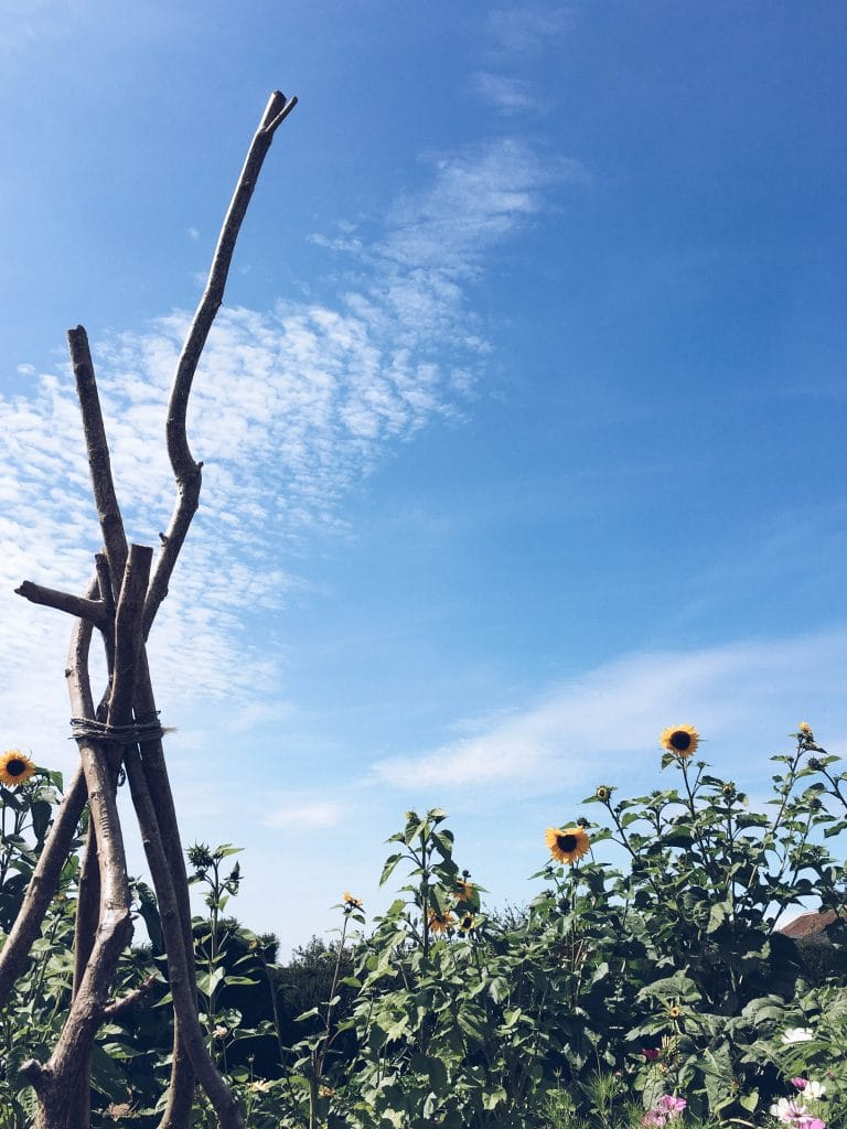 Blue sky and sunflowers at The Ethicurean, Bristol